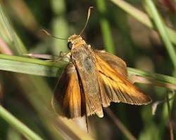 Bay Skipper